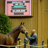 Caption:Hip 374 Changing Skies in foal to Street Cry from Hill 'n' Dale Sales brings $4.2 million<br /> Horses sell at the Keeneland November sales on Nov. 7, 2012, in Lexington, Ky.<br /> Keeneland Hip374 image548<br /> Photo by Anne M. Eberhardt