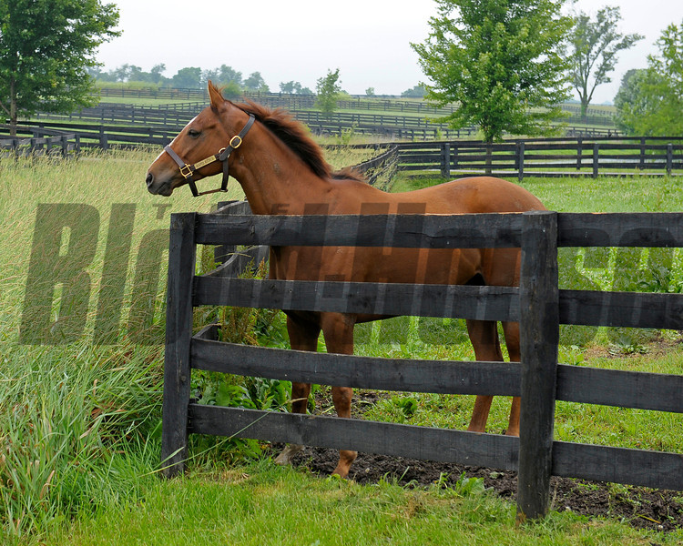 Caption:  <br /> Rapid Redux after his recent arrival at Old Friends near Georgetown, Ky. on June 1, 2012.<br /> RapidRedux image413<br /> PHoto by Anne M. Eberhardt