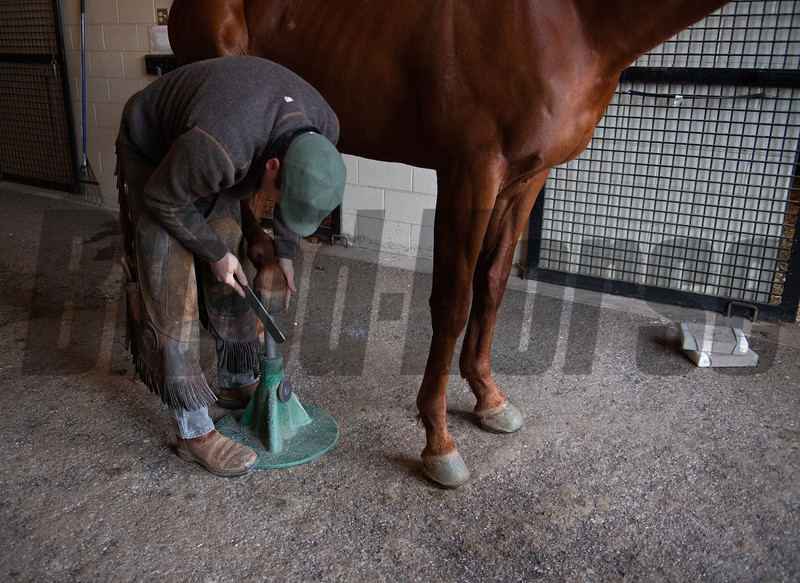 Country House gets a trim on the back from Scott Morrison DVM  at Blackwood Stables on<br /> Feb. 28, 2020 Blackwood Stables in Versailles, KY.