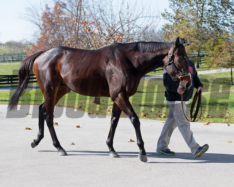 Bolt d'Oro at Spendthrift