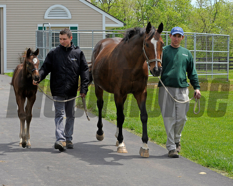 Caption: Supercharger with her 2011 Tiznow colt born on March 30, 2011, at WinStar Farm near Versailles, Ky. <br /> Kentucky Derby and Kentucky Oaks contenders on the track at Churchill Downs near Louisville, Ky. on April 29, 2011<br /> KyDerbyWorks20114_29_11Works1  image559<br /> Photo by Anne M. Eberhardt