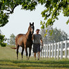 Caption: <br /> Twilight Ridge, 1985 Breeders' Cup Juvenile Filly winner, is now 29 years old and resides at Mike Rutherford's Manchester Farm near Lexington, Ky. The mare was photographed on the farm on June 29, 2012.<br /> TwilightRidgeOrigs 1 image<br /> Anne M. Eberhardt photo