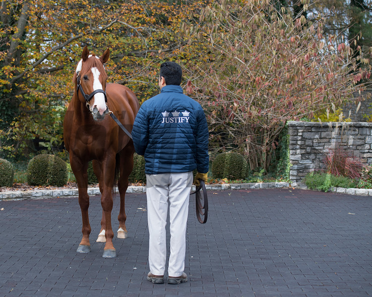 Justify at  Ashford. Stallion open houses in Central Kentucky.