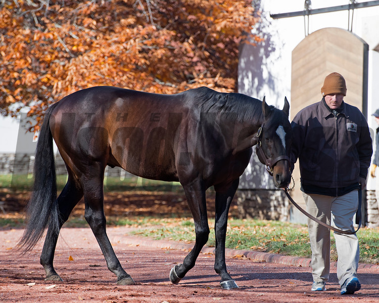 Empire Maker at Gainesway