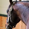 Kodiak Kowboy WinStar Farm Chad B. Harmon