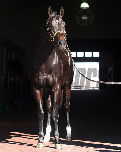 Take Charge Indy at Winstar Farm<br /> photosbyz.com