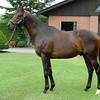 Victoire Pisa at the Shadai Stallion Station on July 8, 2012<br /> Photo by Michele MacDonald