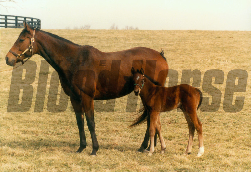 Miesque with 1st foal later named Kingmambo in 1990.<br /> Photo by: Anne M. Eberhardt