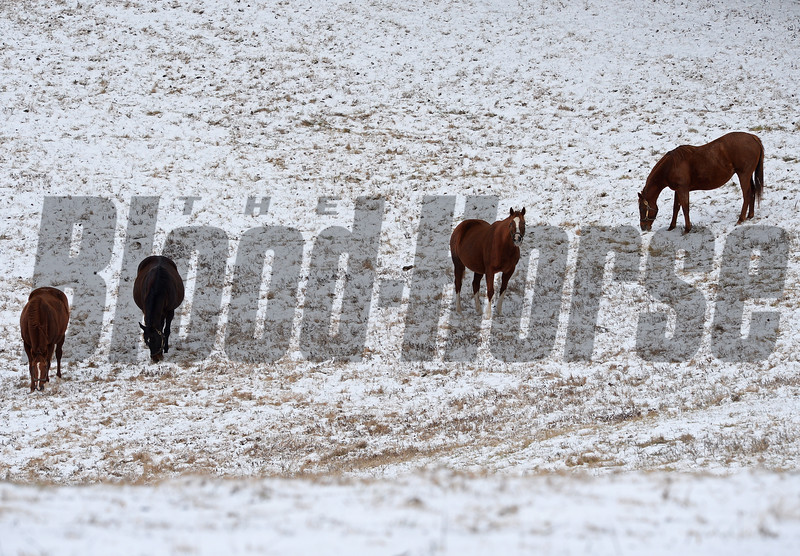Mares at Ashview Farm in Versailles, Ky. on Jan. 13, 2018.