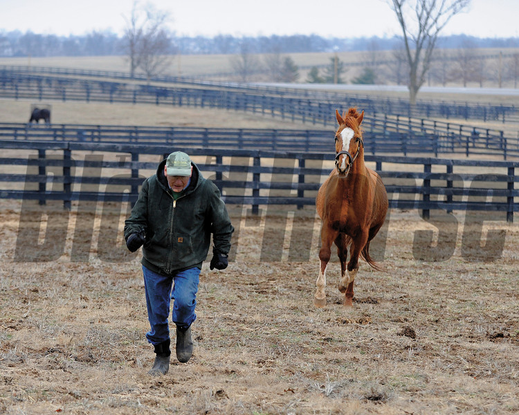 FIELD PLAY<br /> Michael Blowen runs and plays with retired stallion Marquetry at Old Friends retirement facility near Georgetown, Ky.<br /> Photo by Anne M. Eberhardt