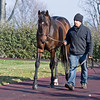 Exaggerator at WinStar on Dec. 10, 2016, near Versailles, Ky.