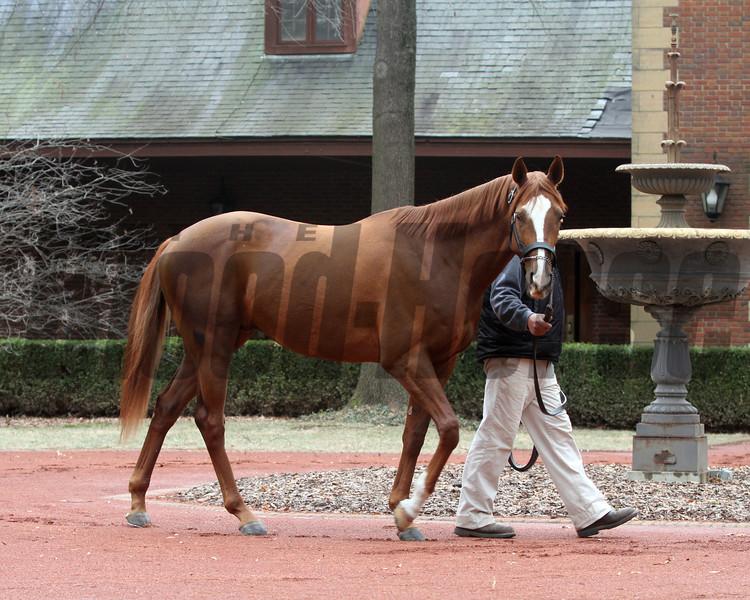 Power Broker at Hill 'n' Dale Farm<br /> photosbyz.com