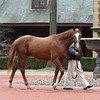Power Broker at Hill 'n' Dale Farm<br /> photosbyz.com