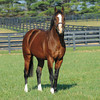 Union Rags at Lane's End.<br /> Photo by Mathea Kelley