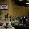 Caption: Hip 110 Nereid, broodmare prospect, consigned by Winter Quarter Farm, agent, brings $1.3 million and purchased by Lane Seliger.<br /> Keeneland January sale at Keeneland in Lexington, Ky. on Jan. 7, 2013.<br /> KeeJan2013 Sales MonOrigs1 image969<br /> Photo by Anne M. Eberhardt