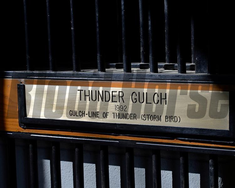 Thunder Gulch, age 23, at Ashford Stud near Versailles, Ky., on Feb. 4, 2015.<br /> ThunderGulch image 815<br /> Photo by Anne M. Eberhardt