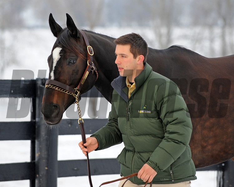 Caption: Broodmare manager Charles Campbell walks Zenyatta to her paddock.<br /> Zenyatta goes out to her paddock on December 20, 2010, at Lane's End Farm near Versailles, Ky.<br /> ZenyattaDec2010 Origs 1 image219<br /> Photo by Anne M. Eberhardt