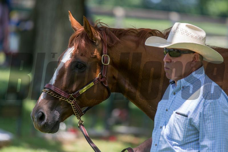 Wise Dan. & Charles LoPresti  @ Old Friends in Gerogetow  KY July 6 2019<br /> ©JoeDIOrio/Winnningimages.biz