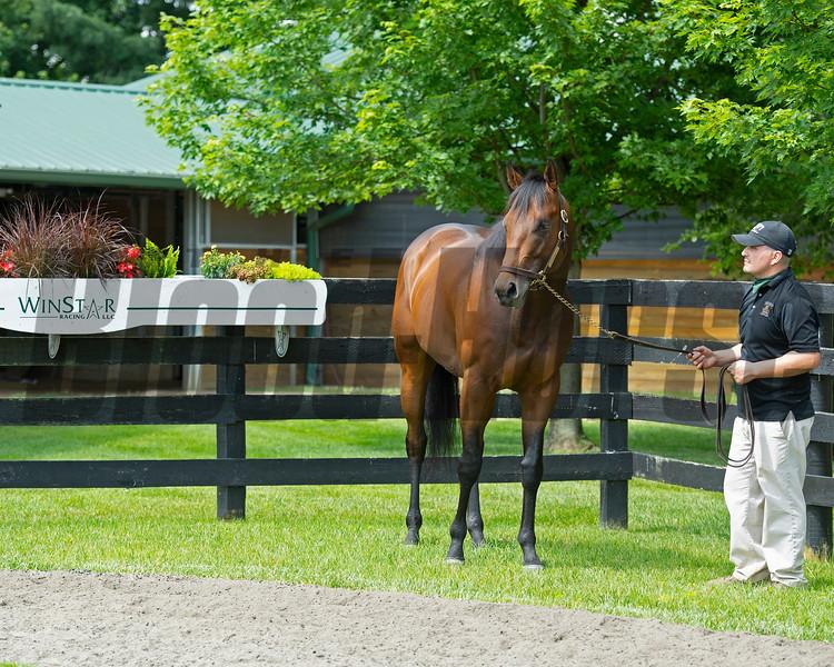 Mr. Monomoy with Liz Crow at WinStar Farm on June 16, 2020. Photo: Anne M. Eberhardt