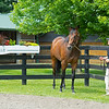 Mr. Monomoy with Liz Crow at WinStar Farm on June 16, 2020. Photo: Anne M. Eberhardt