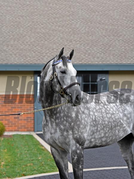 Caption: Frosted<br /> Godolphin stallions at Jonabell near Lexington, Ky., on Dec. 2, 2016.