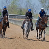 Caption: (L-R): American Heiress filly, 2018 Frosted o/o Ingenue filly, 2018 Paynter o/o Hallie and Beth colt<br /> Training at Silver Springs Training, part of Silver Springs Stud, near Lexington, Ky.,  on April 8, 2020 Silver Springs in Lexington, KY.