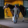 Omaha Beach with Jose Barrera arrives at Spendthrift on Jan. 27, 2020 Spendthrift Farm in Lexington, KY. Photo: Anne M. Eberhardt