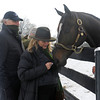 Caption: Zenyatta waits owner Ann Moss unwraps a mint for her as owner Jerry Moss, left, looks on.<br /> Zenyatta goes out to her paddock on December 20, 2010, at Lane's End Farm near Versailles, Ky.<br /> ZenyattaDec2010 Origs 1 image593<br /> Photo by Anne M. Eberhardt