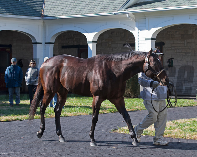Dominus at Spendthrift