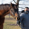Serena's Song<br /> Conrad Bandoroff and Serena's Song at Denali Stud near Paris, Ky on Jan. 21, 2021.