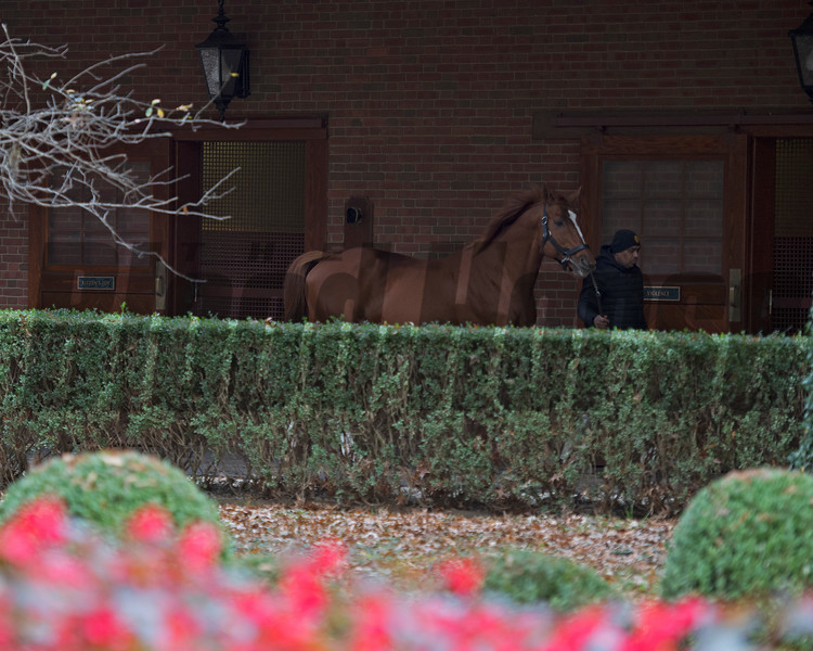 Curlin  at Hill 'n' Dale. Stallion open houses in Central Kentucky.