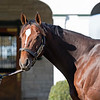 Brody's Cause at Spendthrift