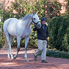 Anchor Down at Gainesway<br /> Keeneland November Sale 2018