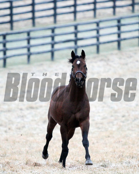 Point of Entry at Adena Springs<br /> photosbyz.com