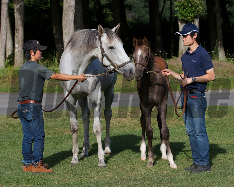 Stardom Bound in Japan with King Kamehameha colt