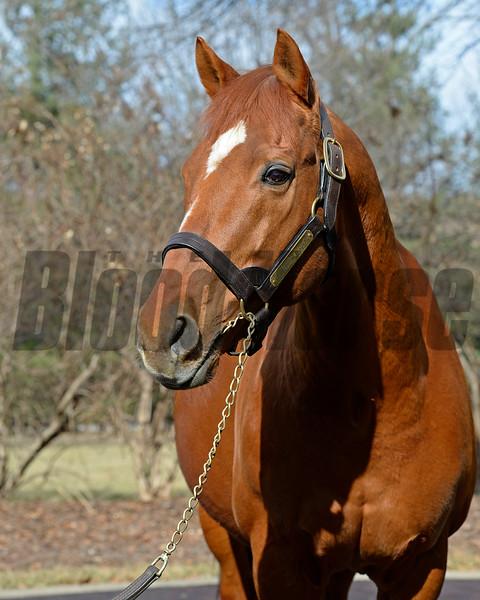 Thunder Gulch, age 23, at Ashford Stud near Versailles, Ky., on Feb. 4, 2015.<br /> Photo by Anne M. Eberhardt