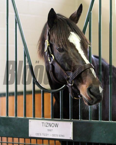 Tiznow WinStar Farm Chad B. Harmon