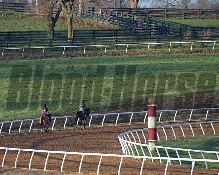 Horses training at Blackwood Stables on<br /> March 26, 2020  in Versailles, KY.