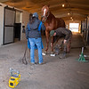 Country House held by Emilee Ingram examined by Scott Morrison DVM at Blackwood Stables on<br /> Feb. 28, 2020 Blackwood Stables in Versailles, KY.