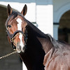 Normandy Invasion at Spendthrift