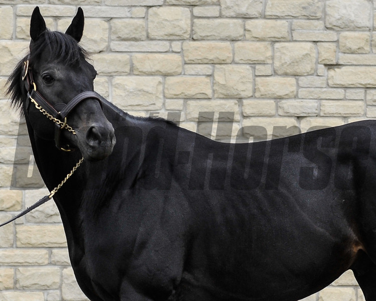 Adena Springs stallion Einstein.