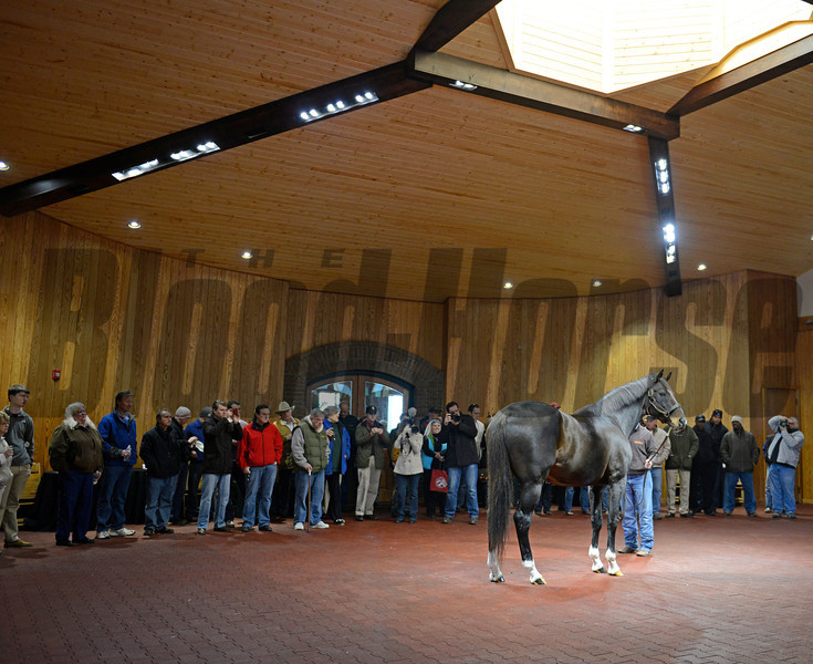 Caption: Tiznow being shown by Tony Cecil as the crowd looks on and takes photos.<br /> An opportunity to visit the new stallion complex at WinStar Farm near Versailles, Ky., was held on Feb. 9, 2013.<br /> Photo by Anne M. Eberhardt
