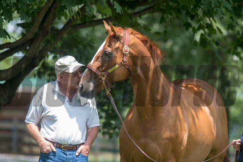 Wise Dan.  & Micheal Blowen @ Old Friends in Gerogetow  KY July 6 2019<br /> ©JoeDIOrio/Winnningimages.biz