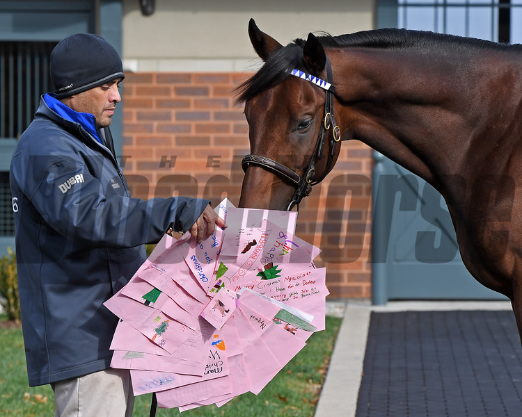 Caption: Nyquist<br /> Godolphin stallions at Jonabell near Lexington, Ky., on Dec. 2, 2016.