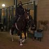 Under tack walk: Travis Warnken on Songbird as she walks the WinStar training barn under tack from 7:30-8 am daily.