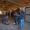 Country House held by Emilee Ingram gets radiographs on the front feet from Scott Morrison DVM (left) with Shawn Morrell DVM holding radiograph against leg at Blackwood Stables on<br /> Feb. 28, 2020 Blackwood Stables in Versailles, KY.