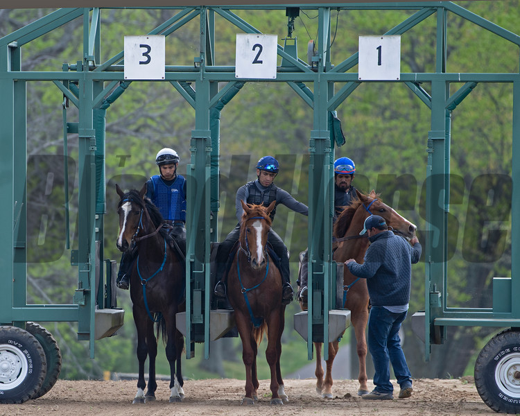 Caption:  trainer Kevin Noltemeyer, right, leads in the 2018 Midshipman filly out of Showing Home . (L-R): <br /> Chasingserendipity filly, Purrfect Love filly,  2018 Midshipman filly out of Showing Home <br /> Training at Silver Springs Training, part of Silver Springs Stud, near Lexington, Ky.,  on April 8, 2020 Silver Springs in Lexington, KY.