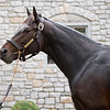 Mo Town at Ashford. Stallion open houses in Central Kentucky.