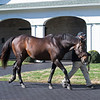 Malibu Moon at Spendthrift