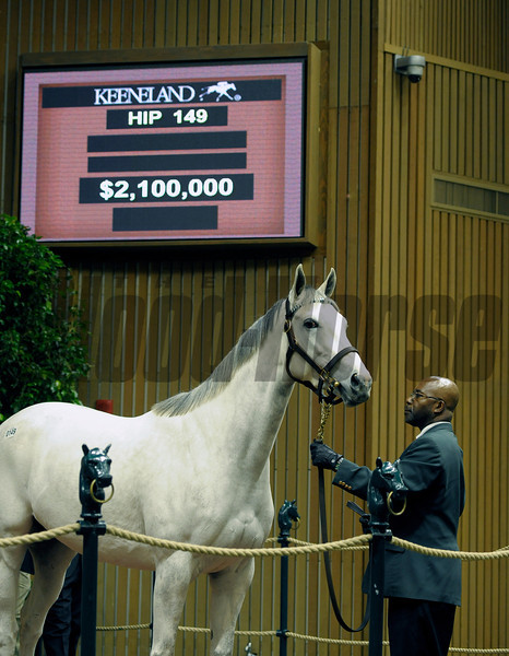Caption: Hip 149 Zazu from Lane's End, agent, brings $2.1 million. <br /> Horses sell at the Keeneland November sales on Nov. 6, 2012, in Lexington, Ky.<br /> Keeneland MonRing2 image352<br /> Photo by Anne M. Eberhardt